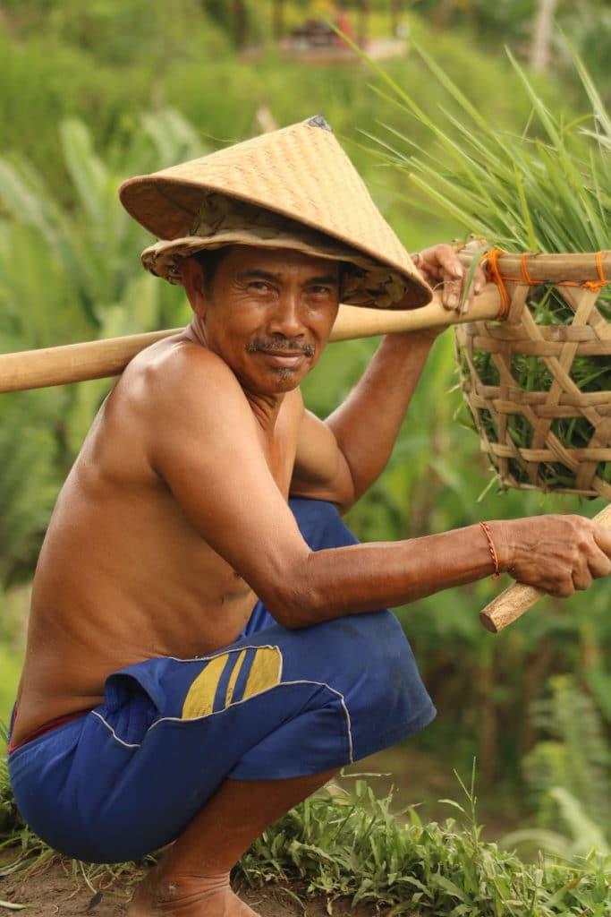 Recogedor de arroz Tegalalang Ubud