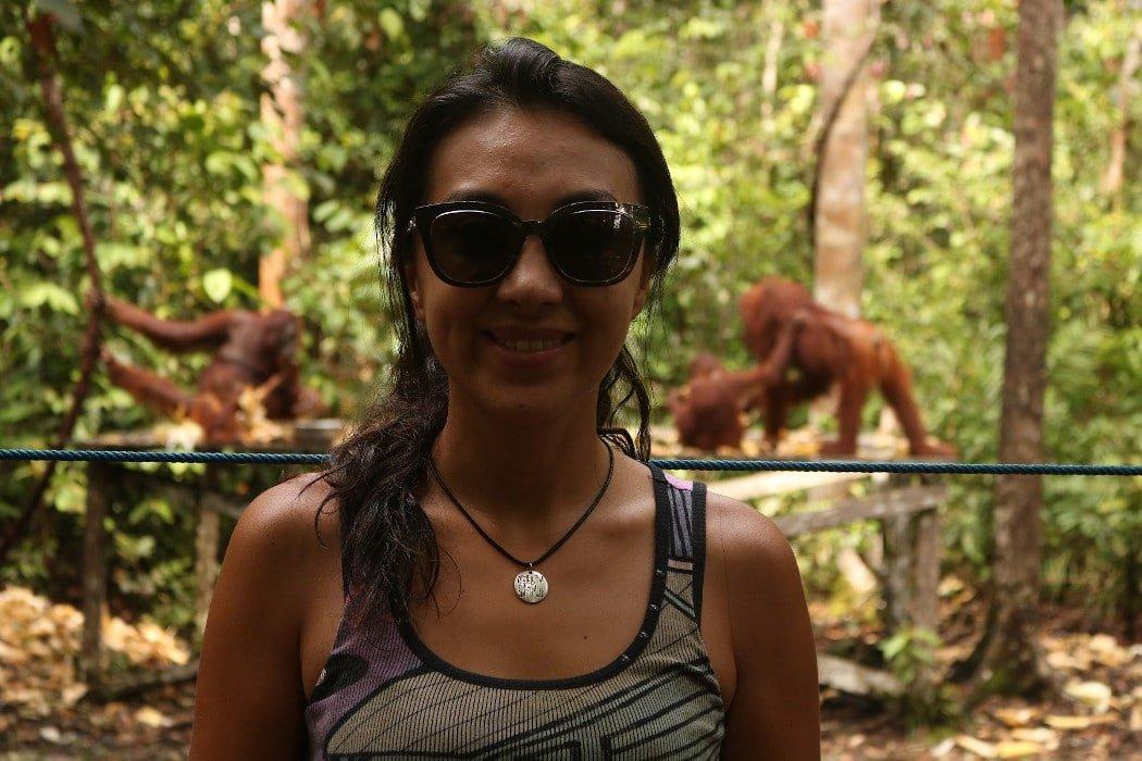 Orangutánes alimentándose